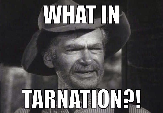 what in tarnation meme